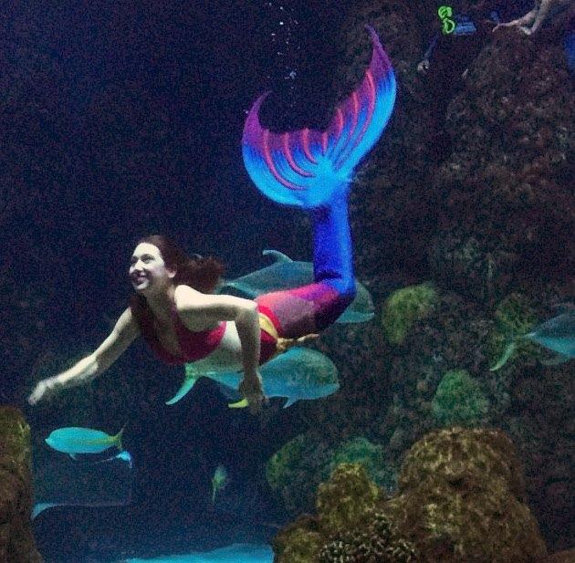 Denver Aquarium.jpg