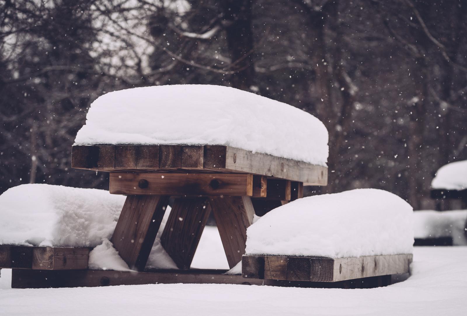 terry_fox_winter_blog1.jpg