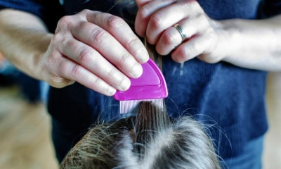 Regular combing with a fine tooth comb can help prevent infestation.