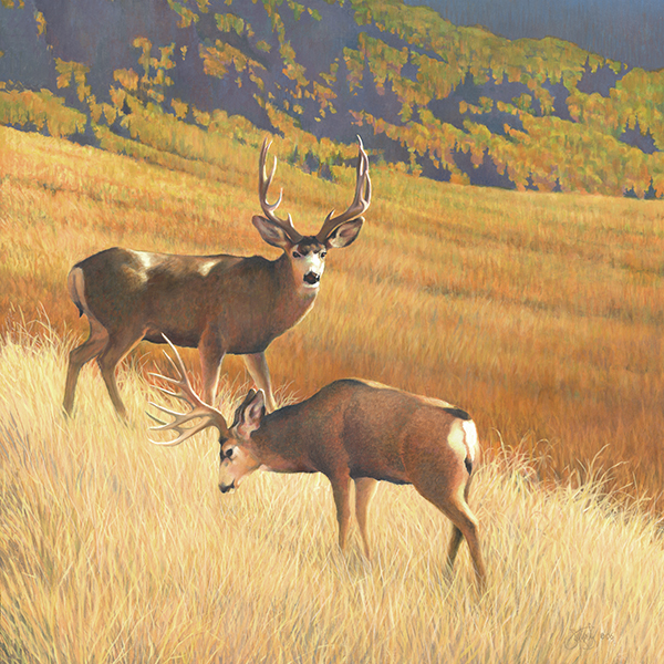 """Autumn Glory"" - 2007 Mule Deer Foundation's artist of the Year. Canvas Giclee artist proofs available from $125"