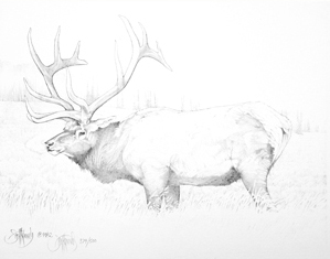 """Wapiti""  - Only 4 prints available in this   limited edition. Image size: 8""x10.5"" f  rom $45."