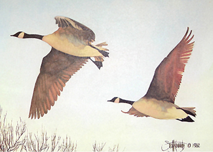""":Canada Geese"" - Only 3 prints available in this  limited edition. Image size: 5""x7"" f  rom $35."