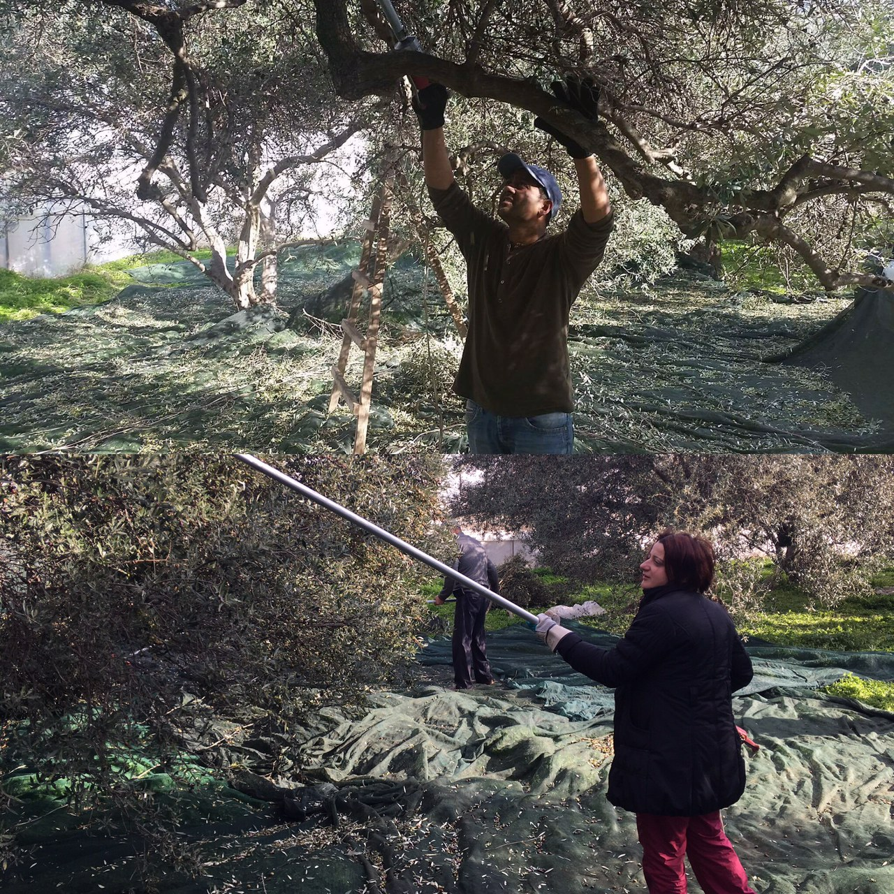5. Our co-founders Maria and Kamil working the trees.JPG