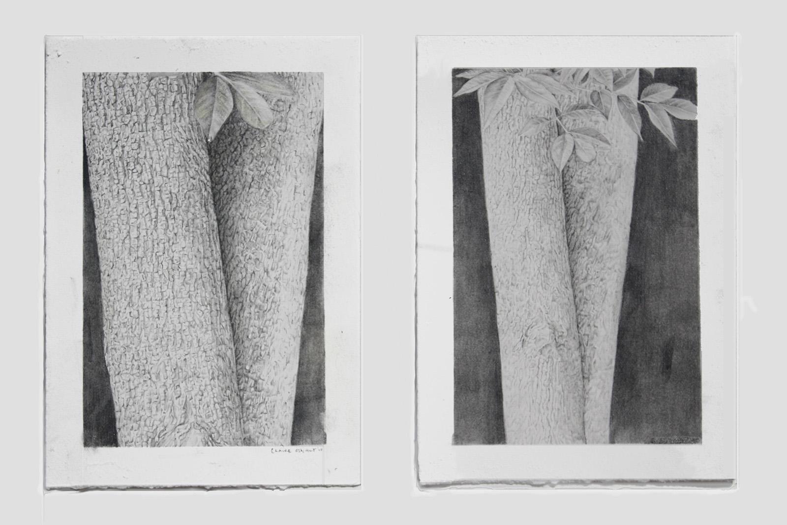 """Treeform I & II (diptych), 11"""" x 6"""", 2009"""