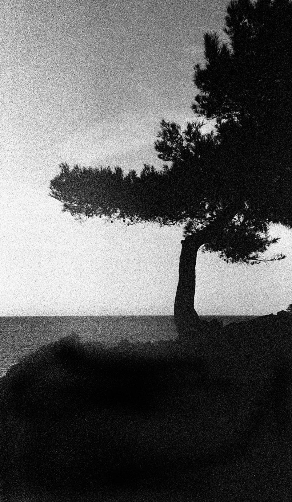 med tree.jpg