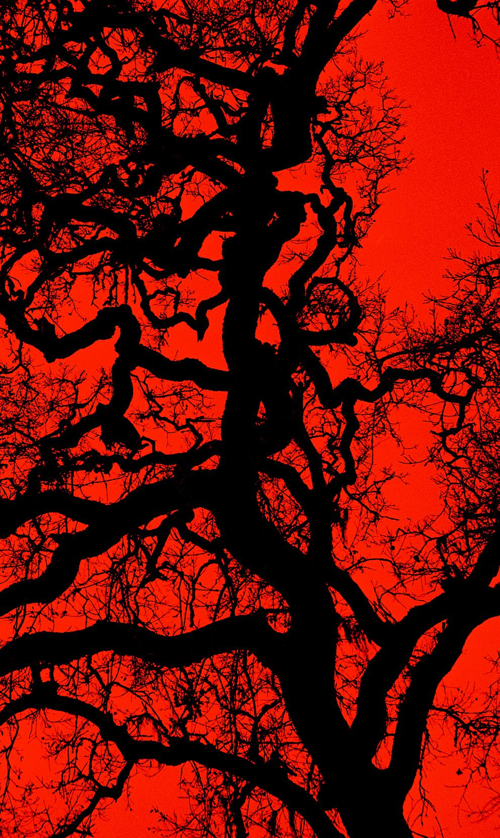Tangled Red.jpg