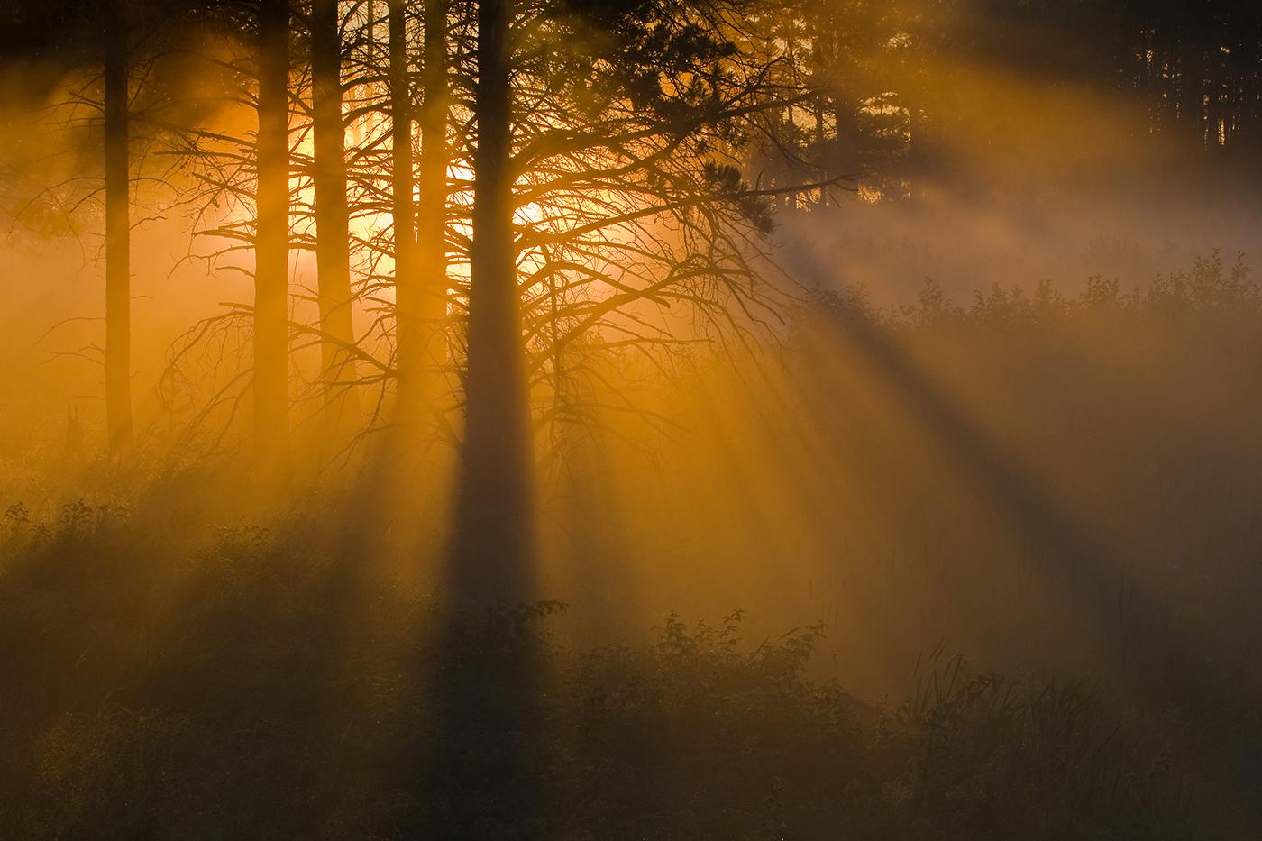 Nikhil Bahl - Golden Light.jpg