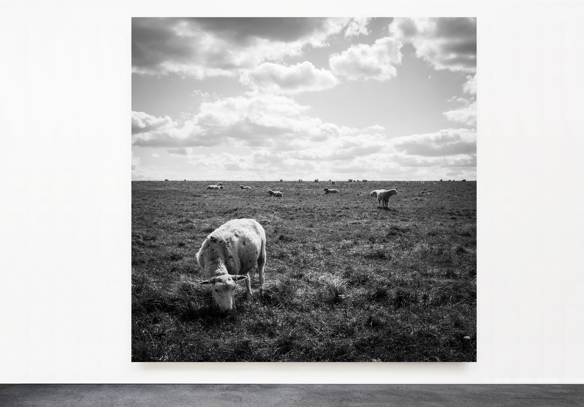 PANTUSO_PHOTOGRAPHY_SHEEP_STONEHENGE.jpg