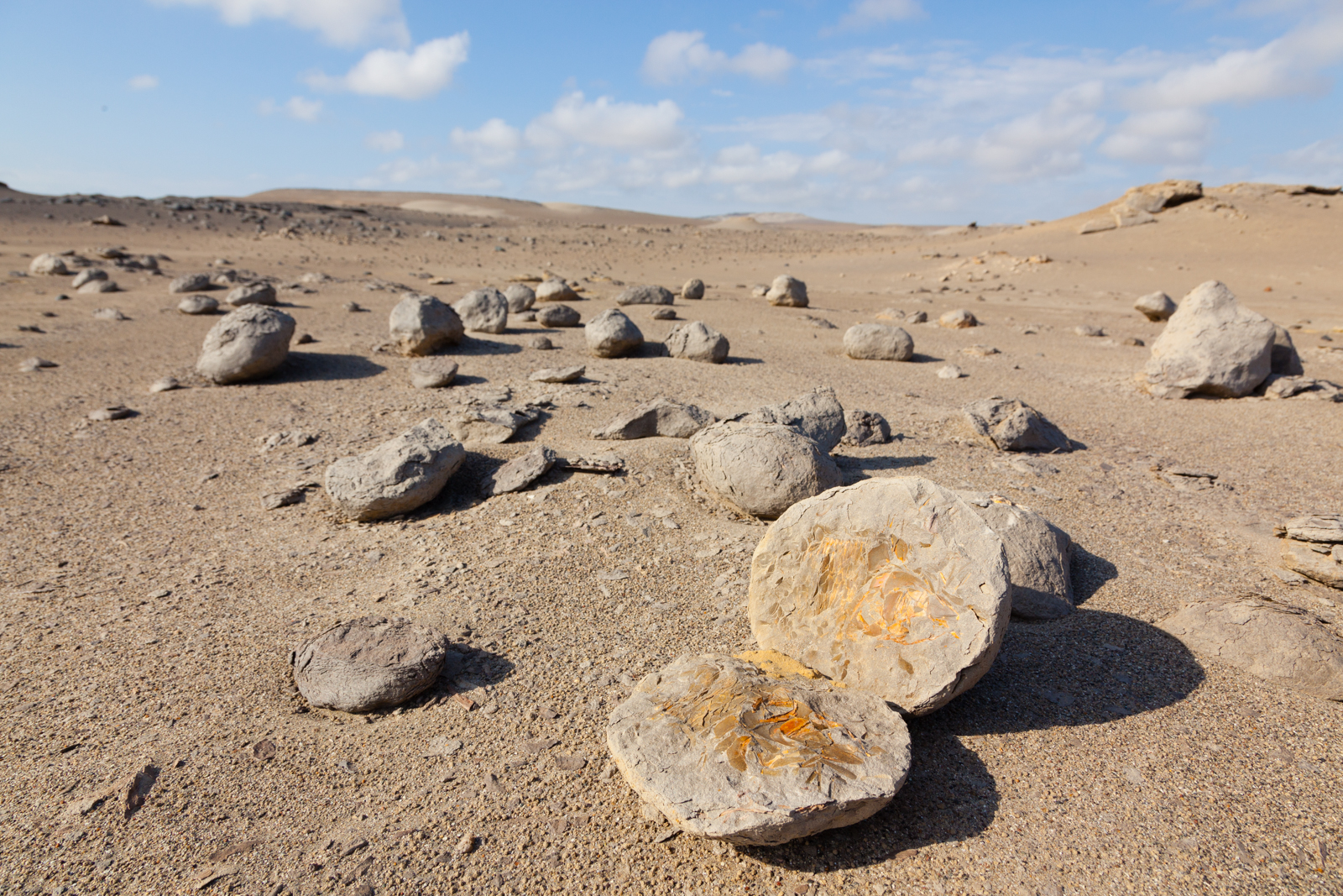Fish fossils litter the desert floor. Credit: Andy Isaacson