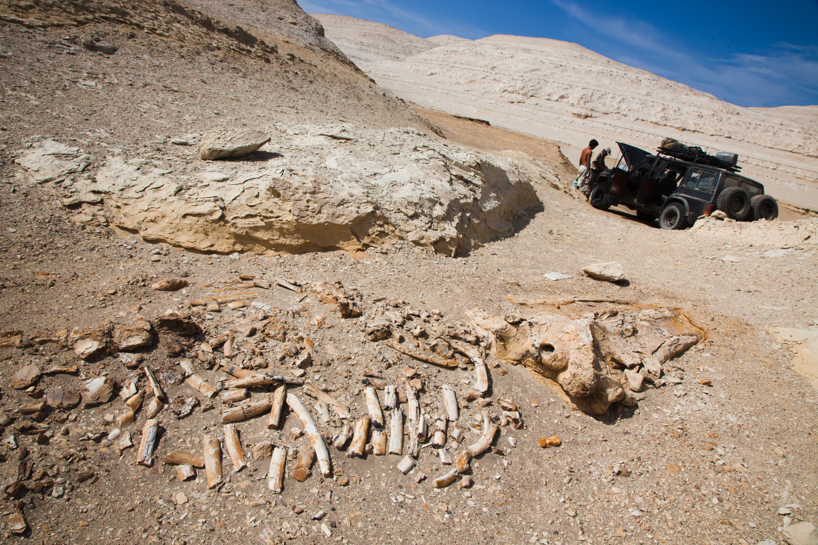 Whale skeleton. Credit: Andy Isaacson