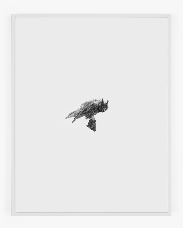 1861_Long-eared_Owl_Handal_Web.jpg