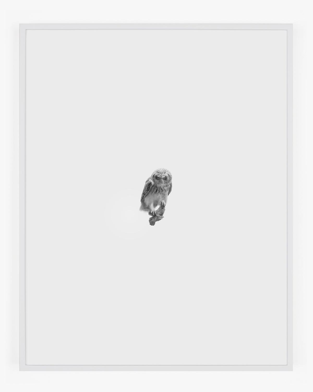 1863_Short-eared_Owl_Handal_Web.jpg