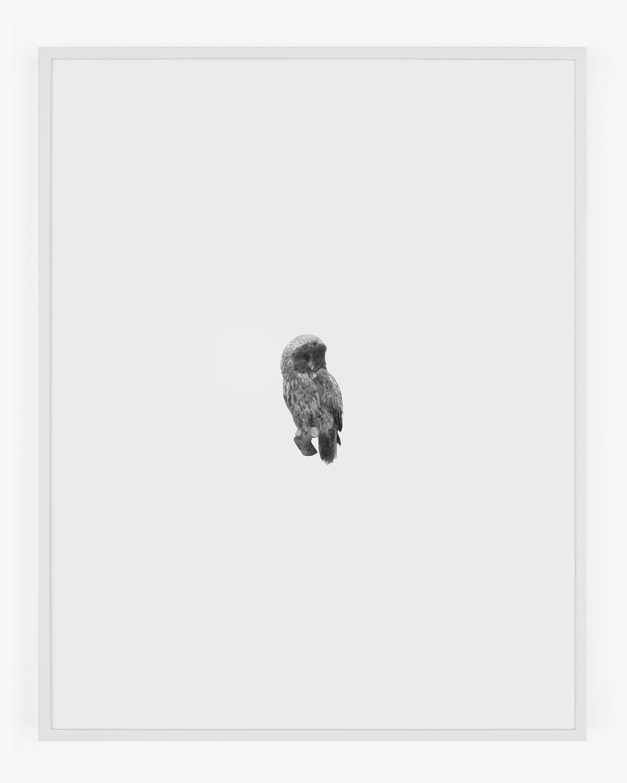 6692_Great_Gray_Owl_Handal_Web.jpg
