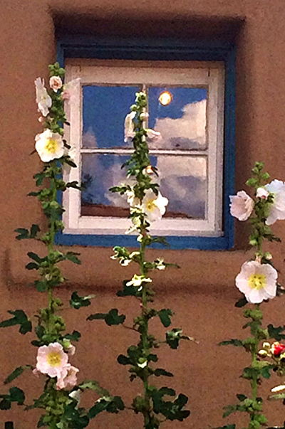 Photo I took of hollyhocks in front of a small blue window on Canyon Road, Santa Fe.