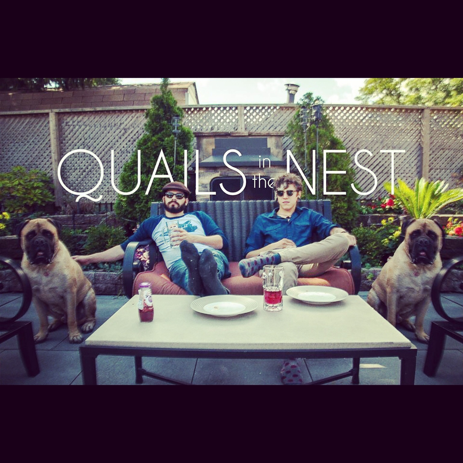 Quails in the Nest
