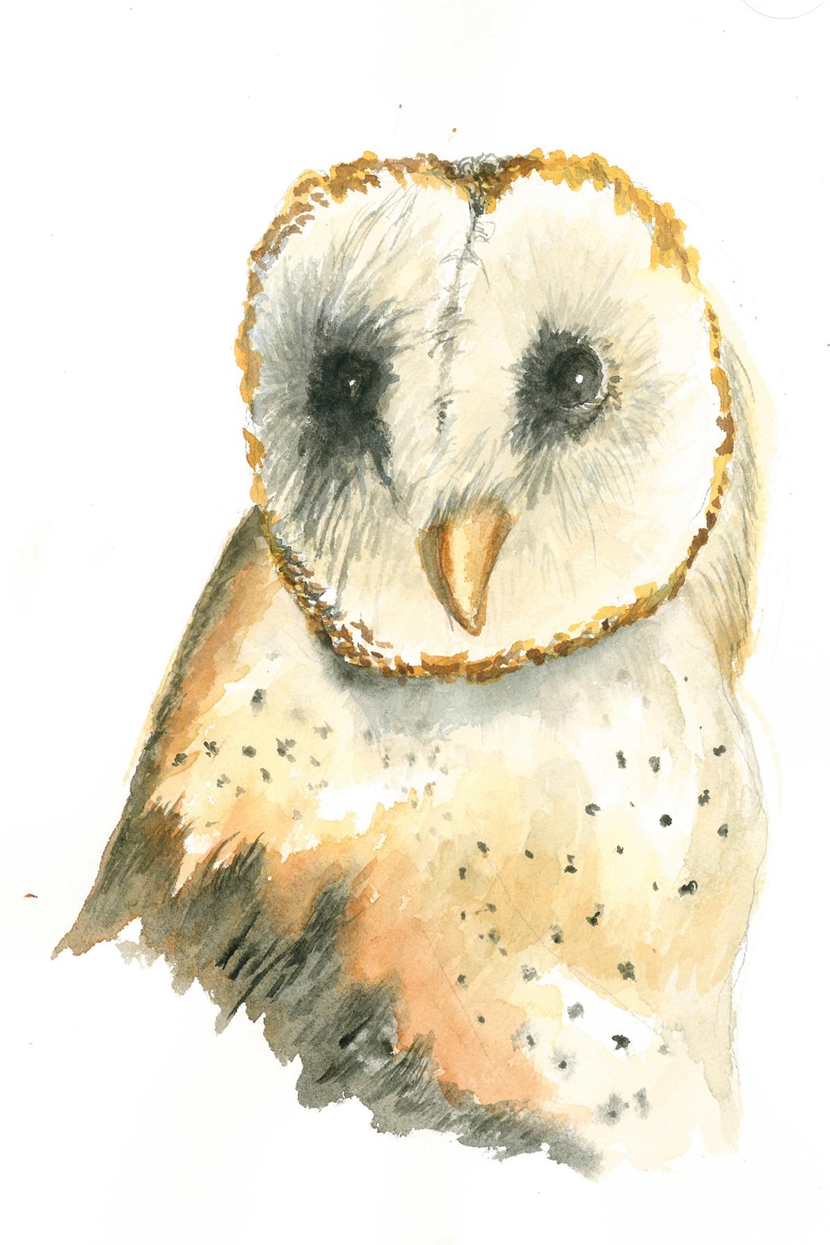 Jones art - Barn Owl.jpg