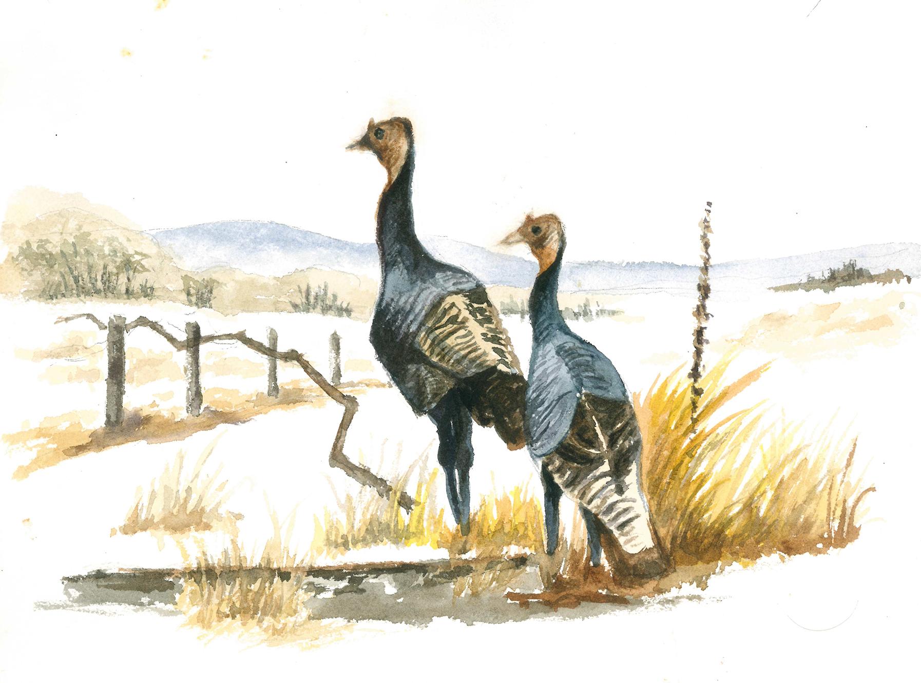 Jones art - Turkeys.jpg