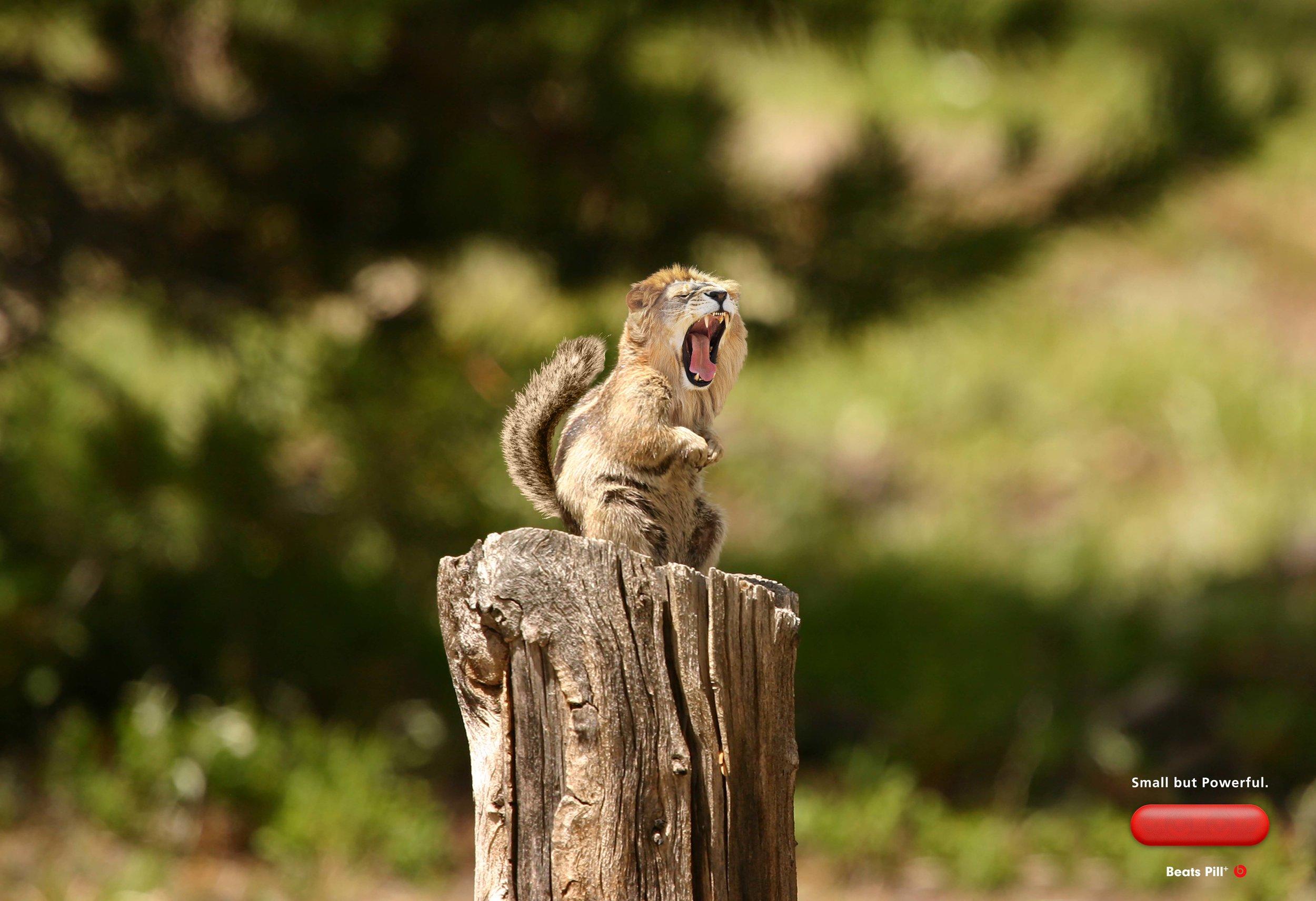 beatspill_squirrel (1).jpg