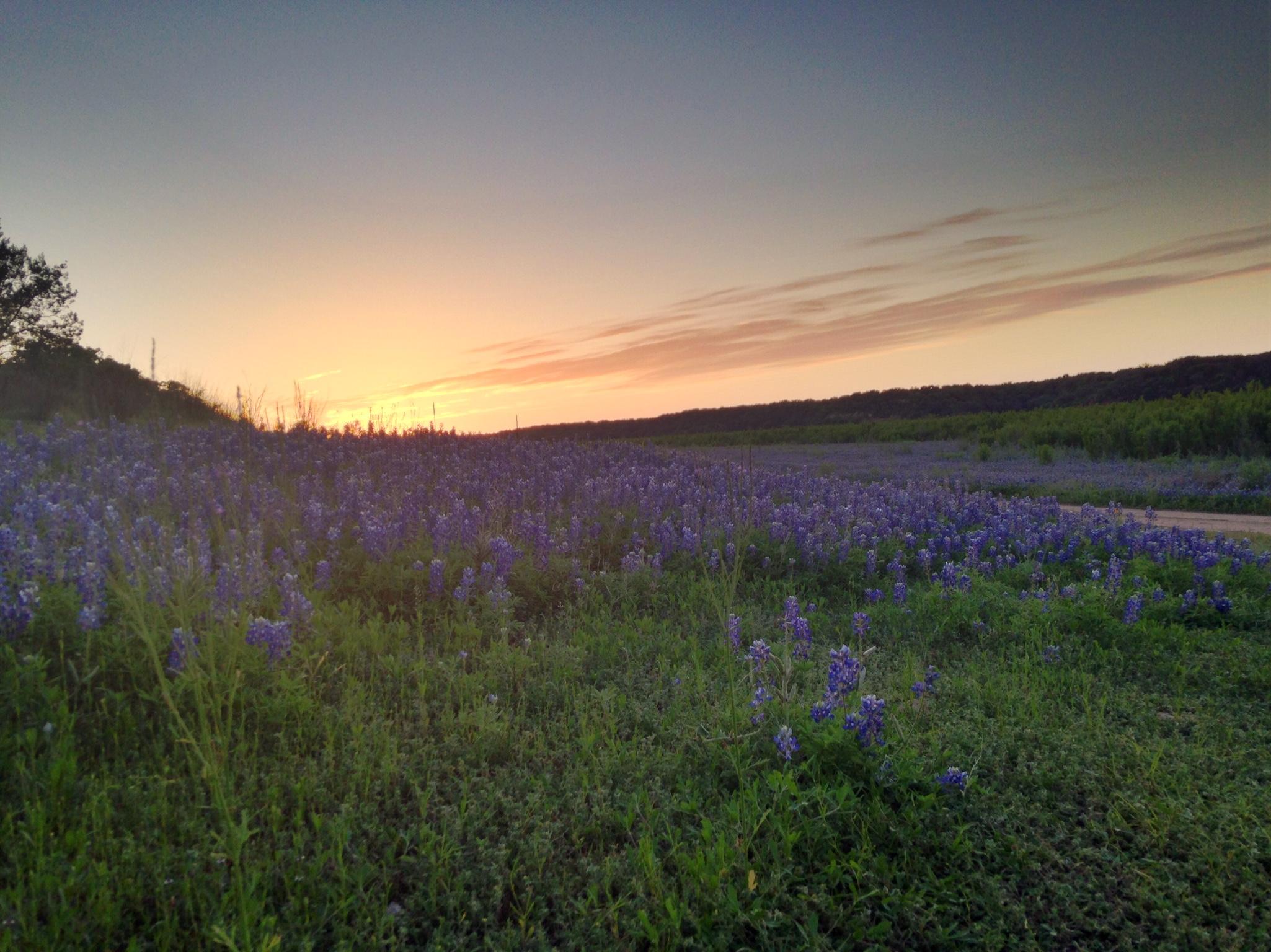 #My Photography | Spicewood, Texas