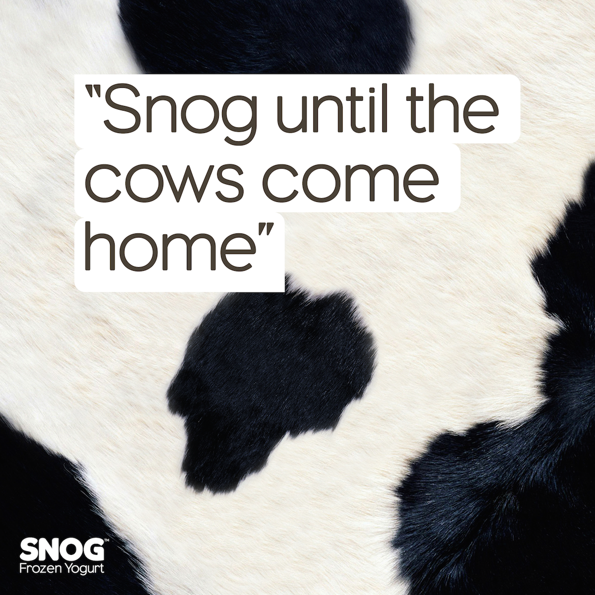 cows come home-01.png