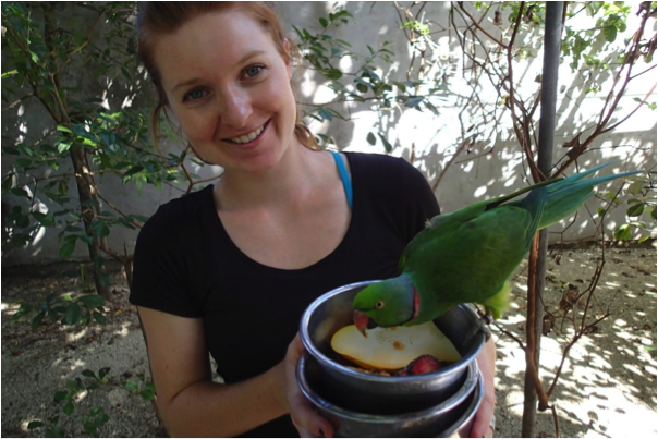 feeding the Echo Parakeets at the Gerald Durrell Endemic Wildlife Sanctuary