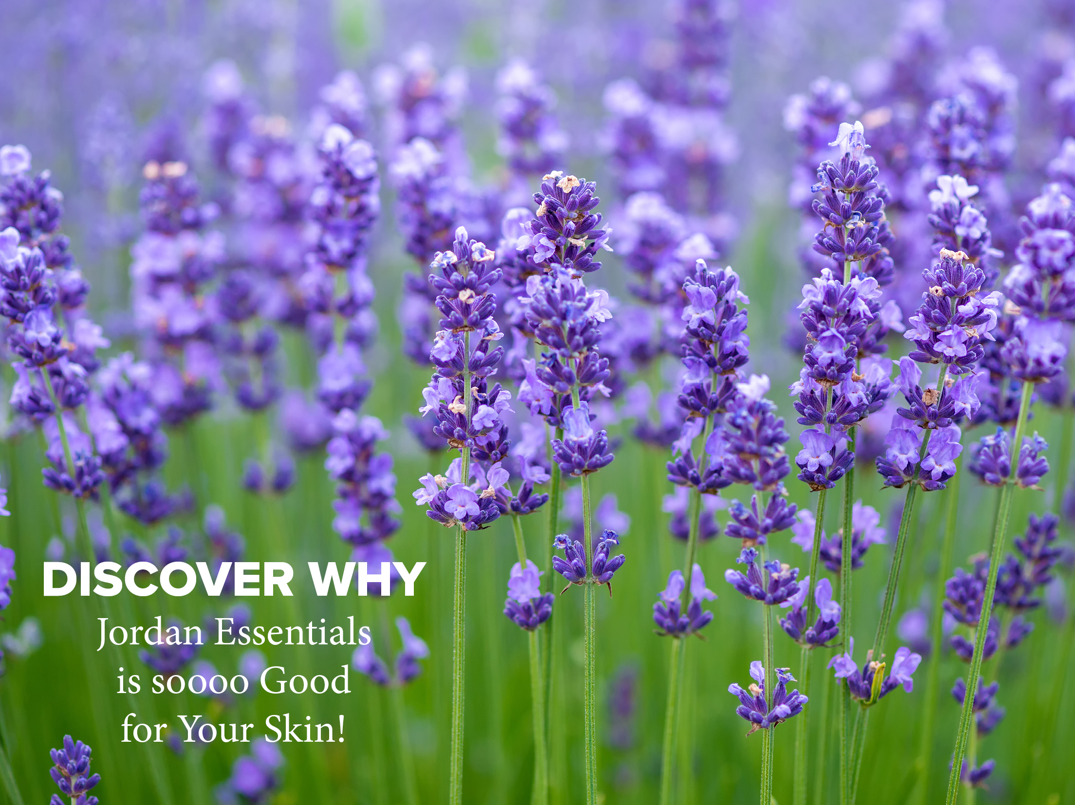 Lavender Discover Why.jpg
