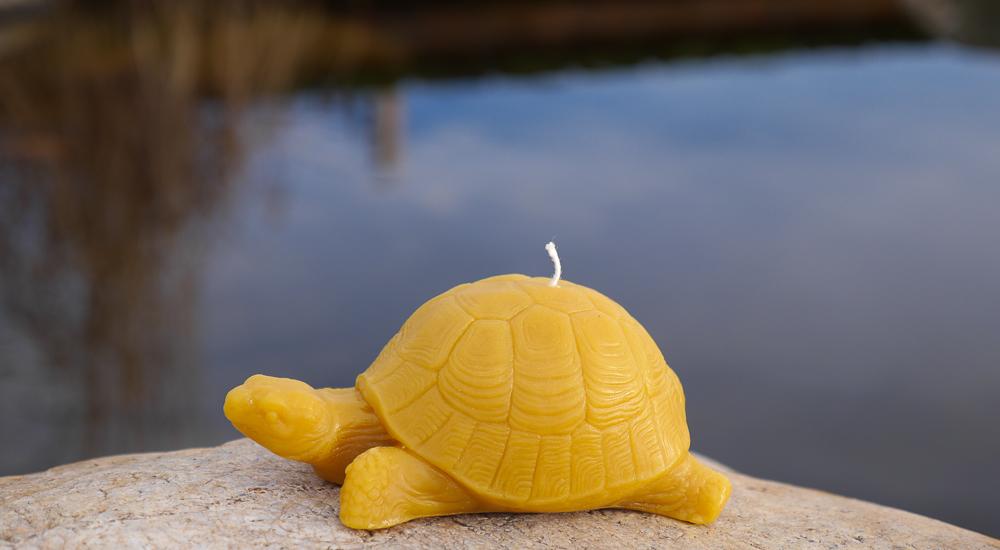 turtle6.jpg (1 of 1).jpg