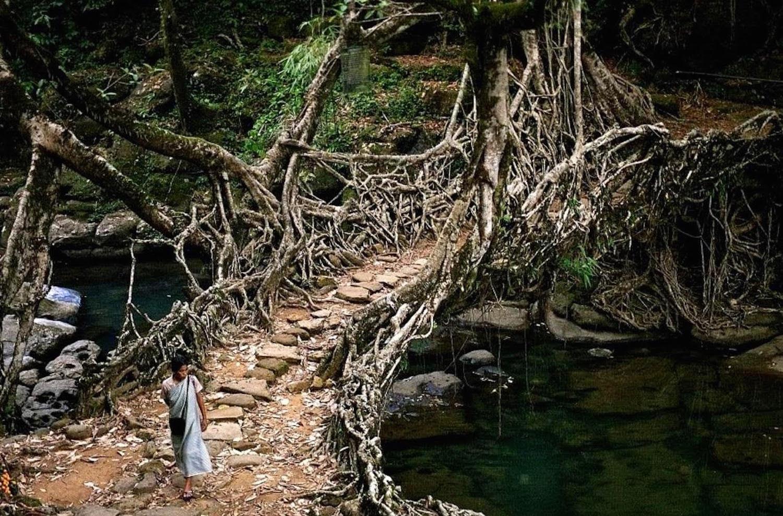 Root Bridges of Meghalaya
