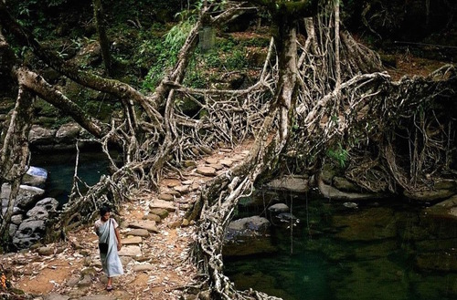 Root Bridges of Meghalaya