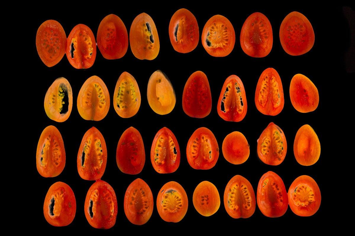 Myo-tomato004-ok.jpg
