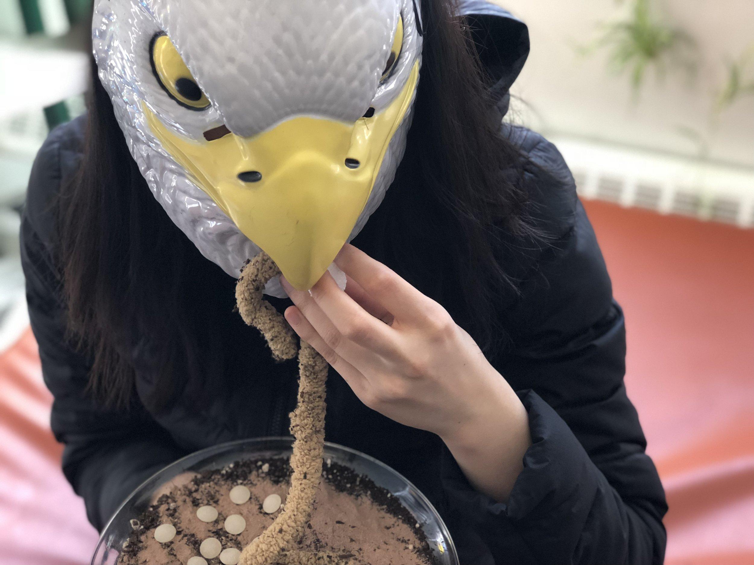 3.bird.jpg