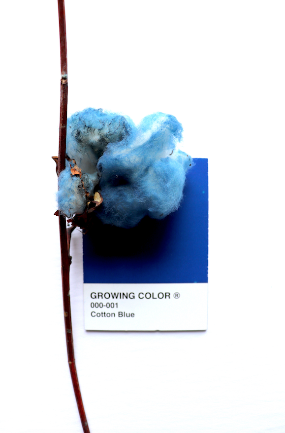 GROWING COLOR PROTOTYPES 1.png