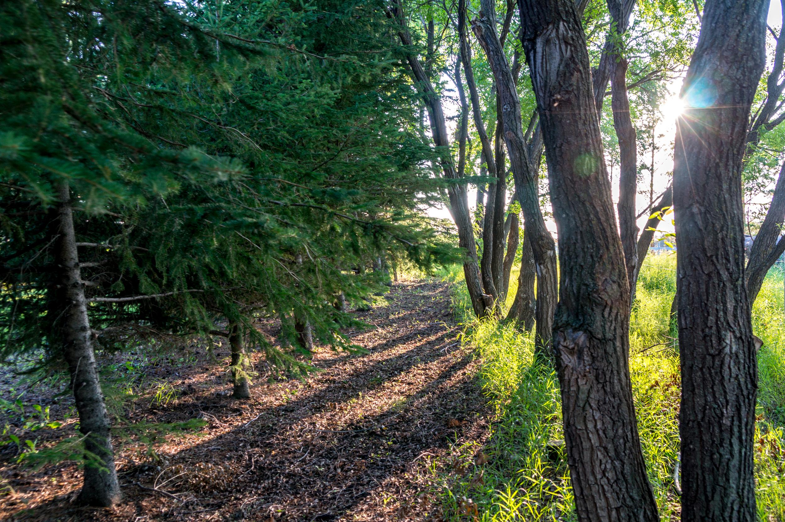 tree ground-08077.jpg