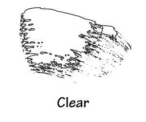 clear+mascara+copy.jpg