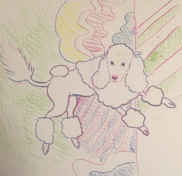 Geddy the Poodle watercolor pencil.png