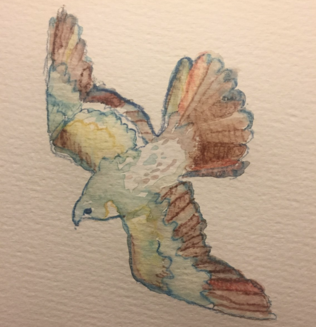 Falcon Watercolor - Becky Jewell.png