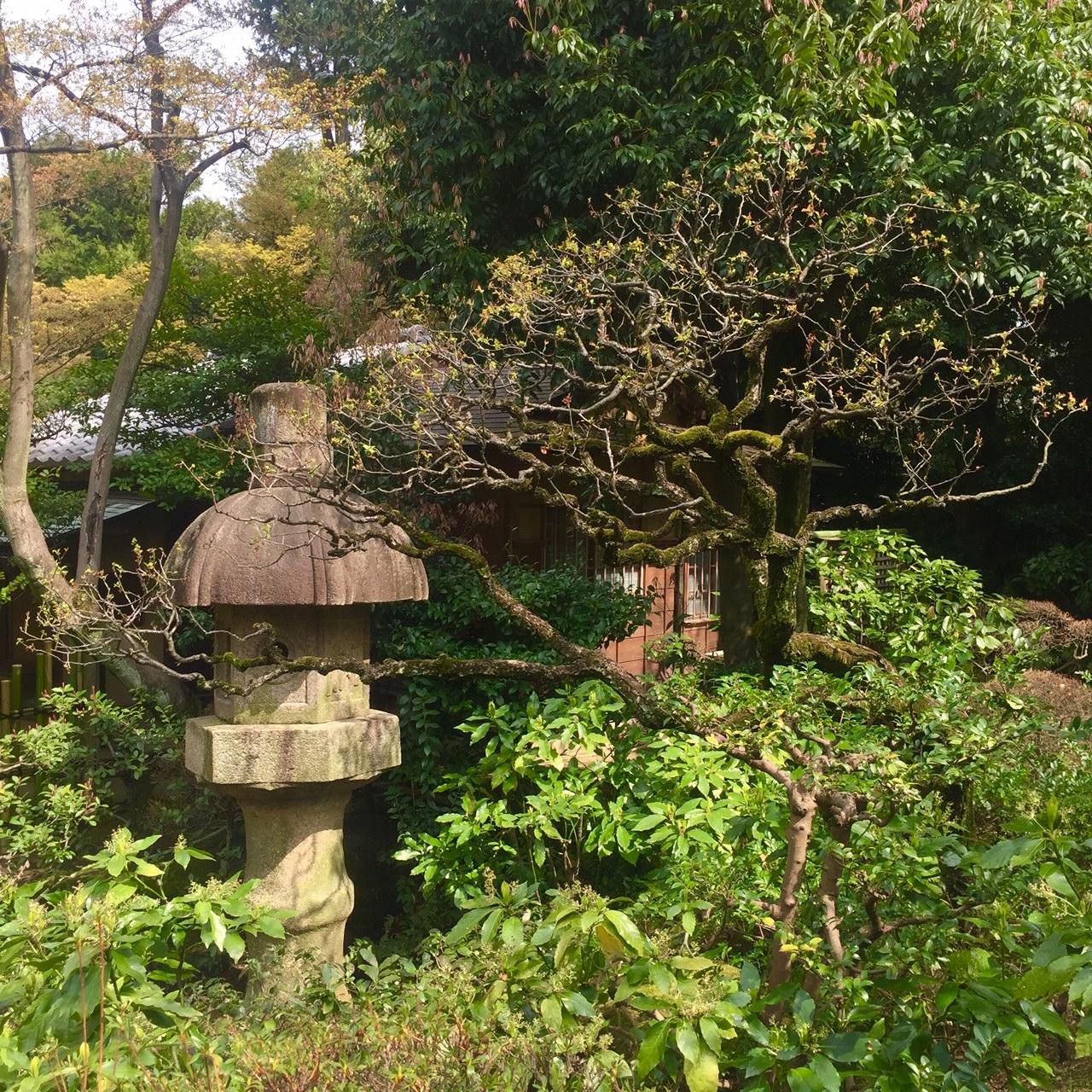 nezu gardens tokyo.jpg