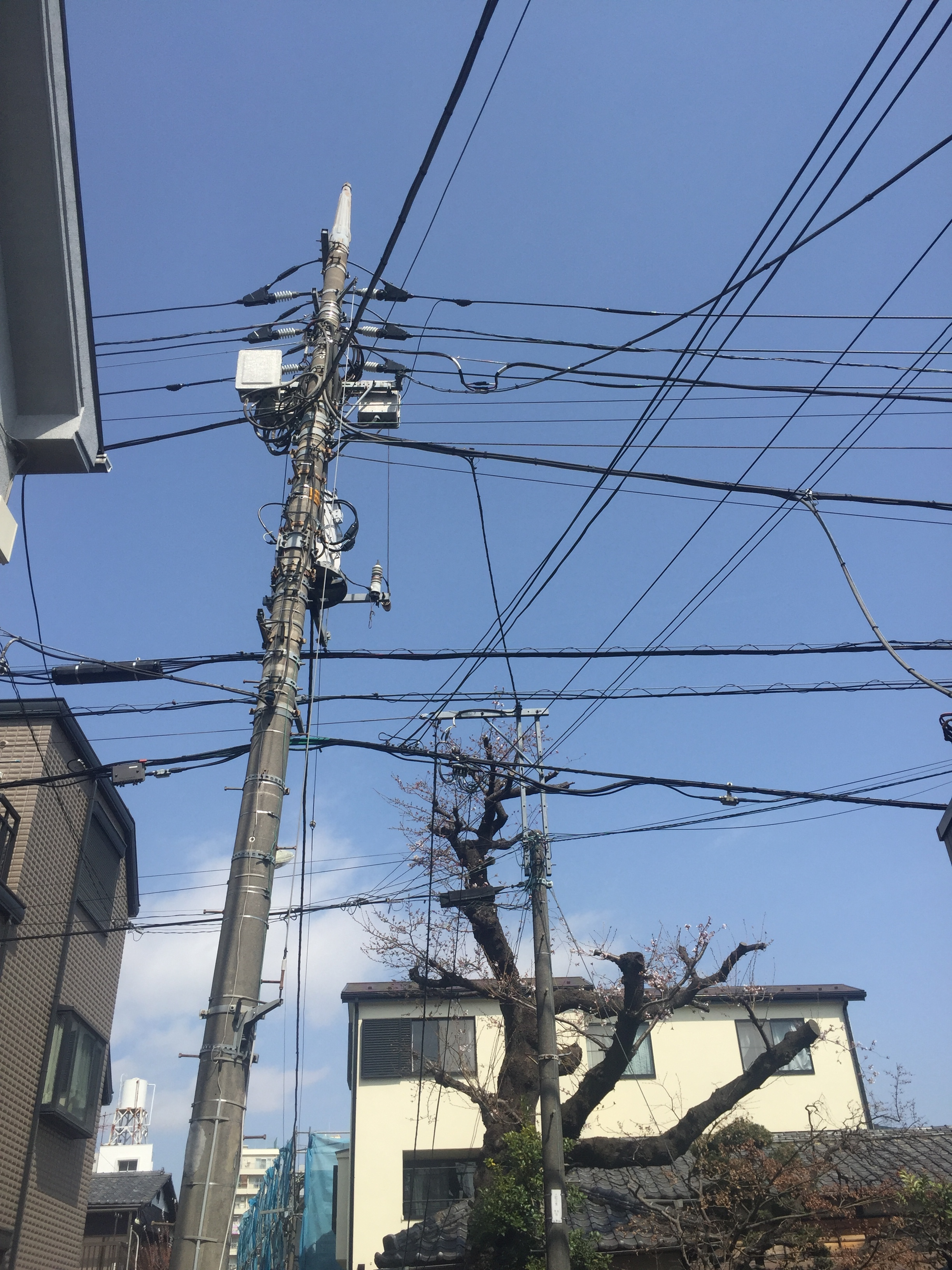 shin koenji wires and trees.JPG