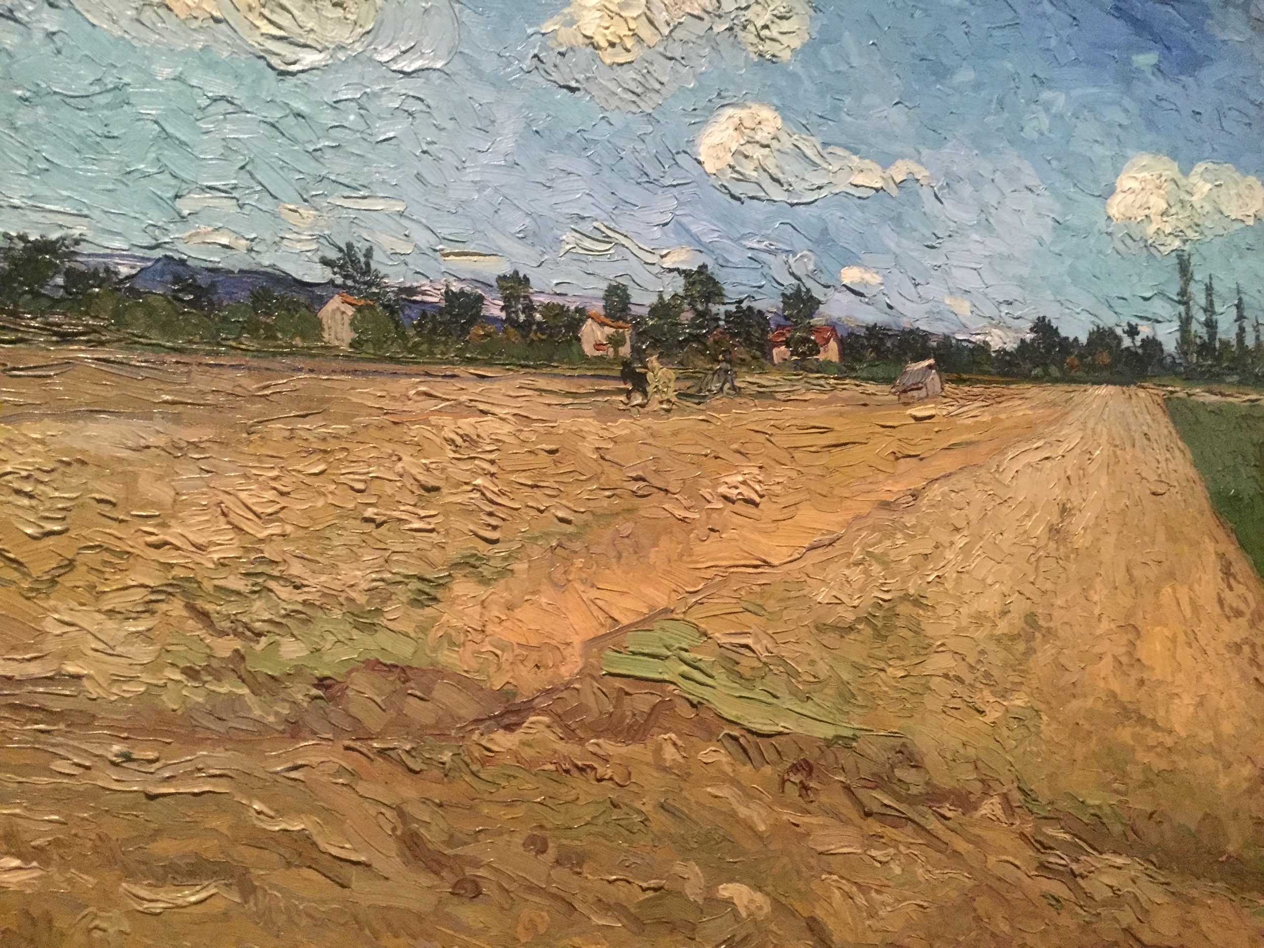 vincent van gogh wheat fields.JPG