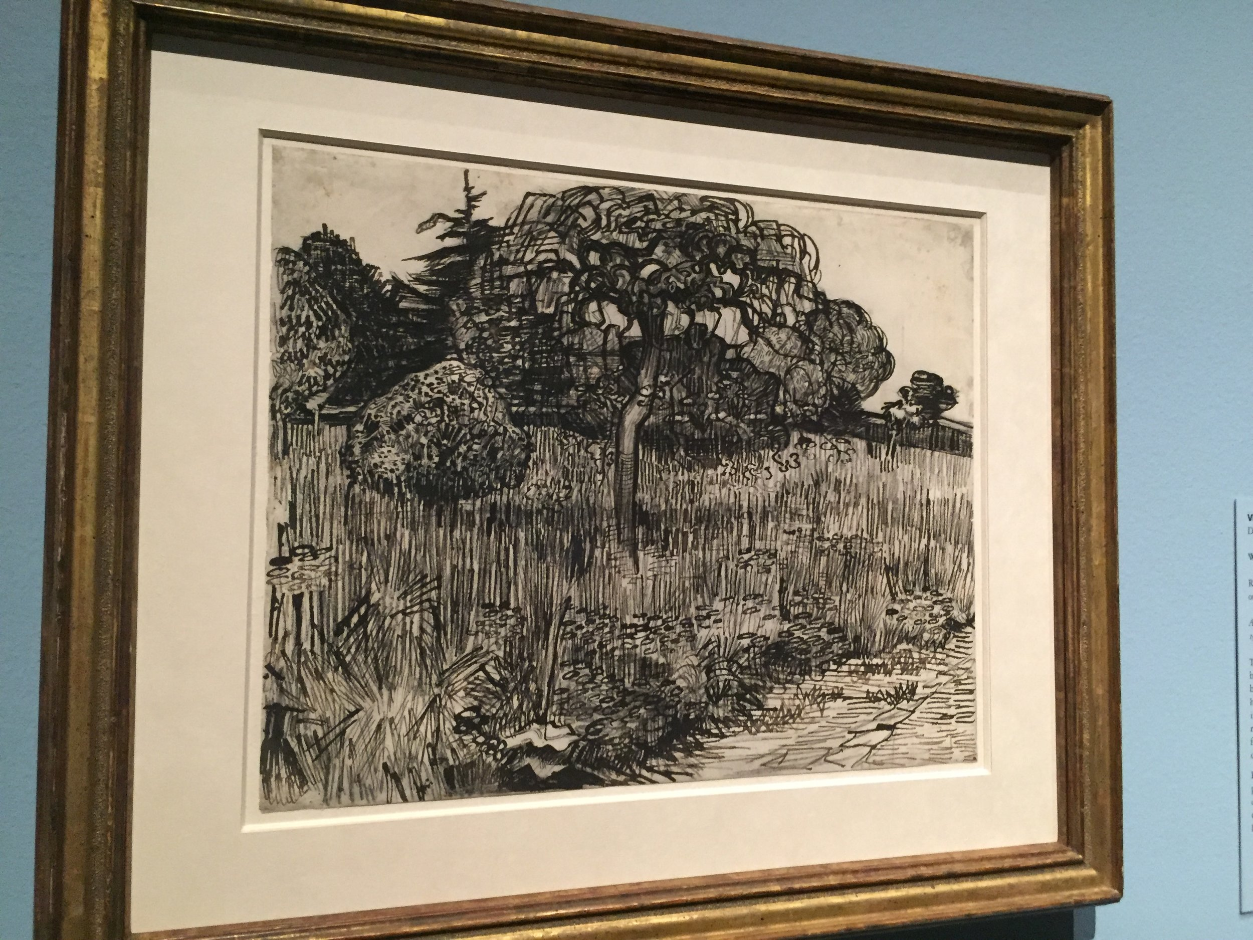 van gogh tree drawing.JPG