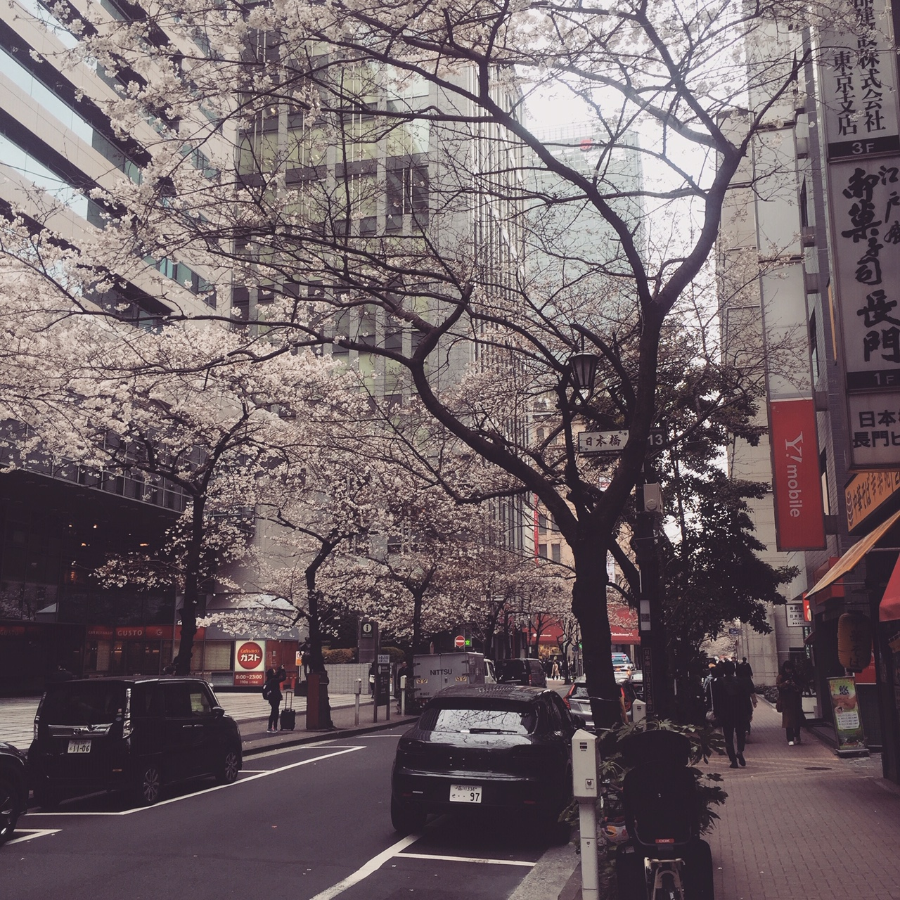 Cherry blossoms in Nihonbashi