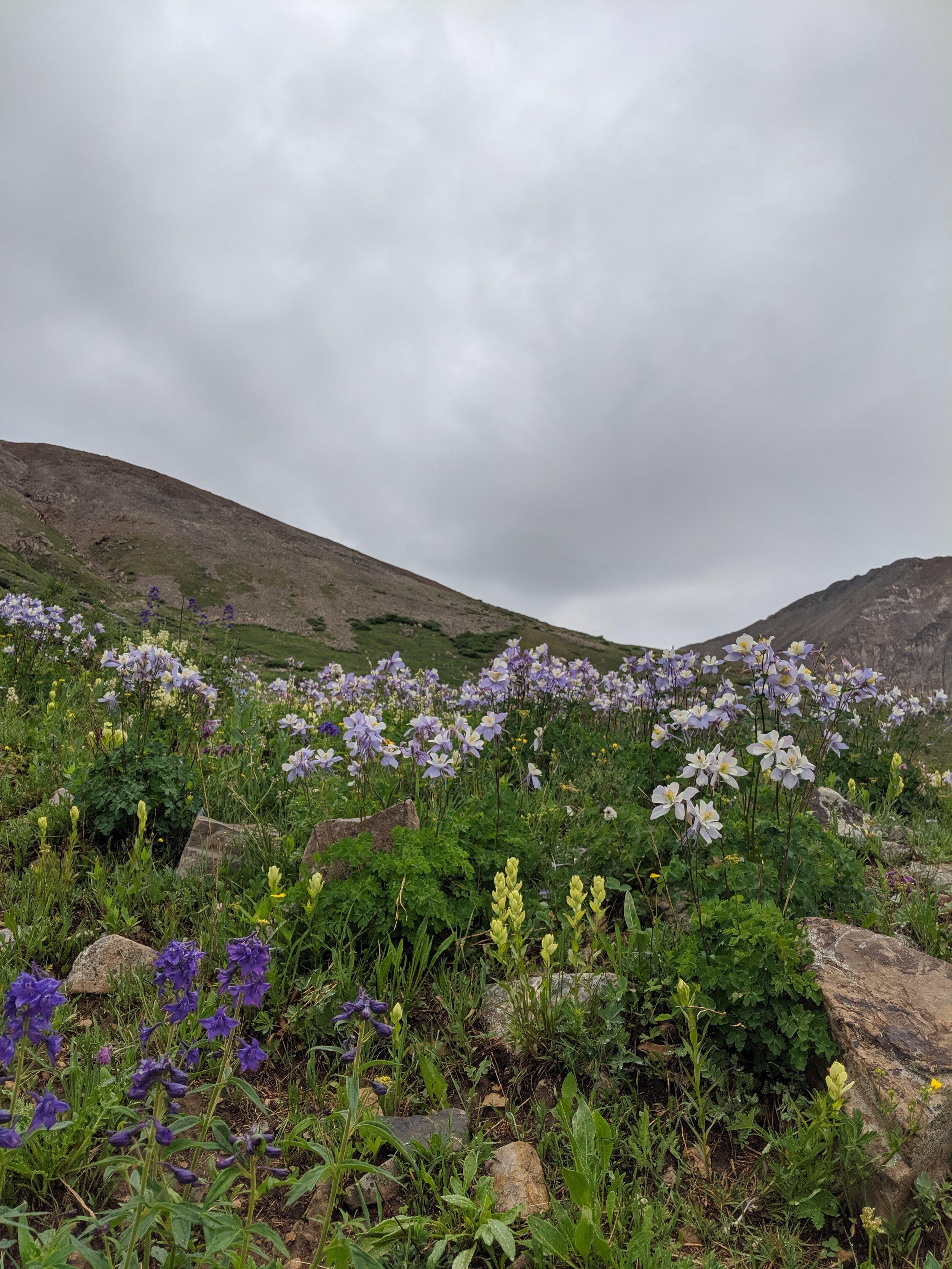 columbine mountain field becky jewell leadville mt sherman.jpg