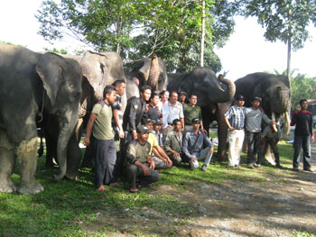 Workshop participants posting with the elephants.