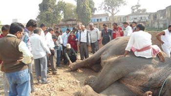 Dr. Sarma demonstrating proper foot care