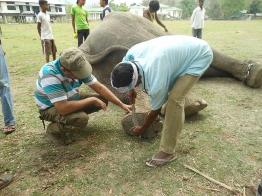 Dr. Sarma teaching mahouts how to use the khukri