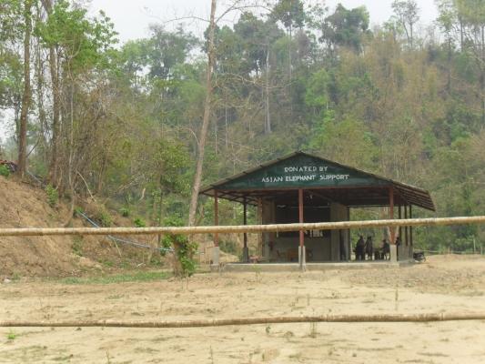 The Elephant Hospital