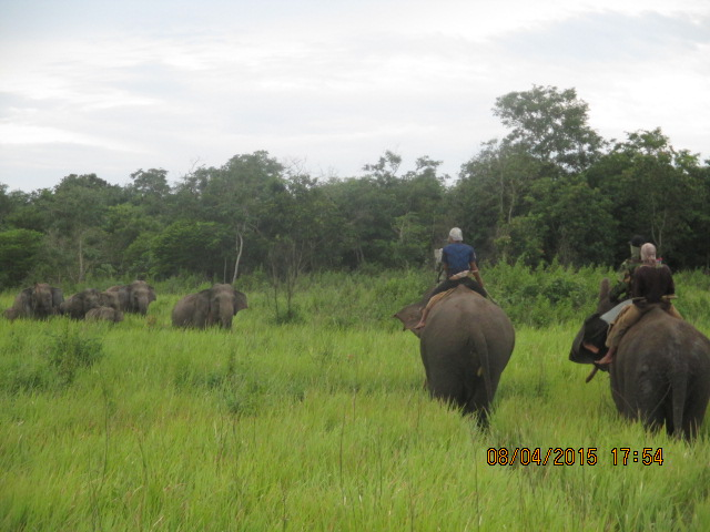Monitoring migration of wild elephants