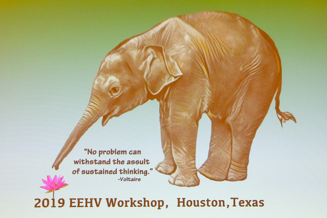 eehv workshop.jpg