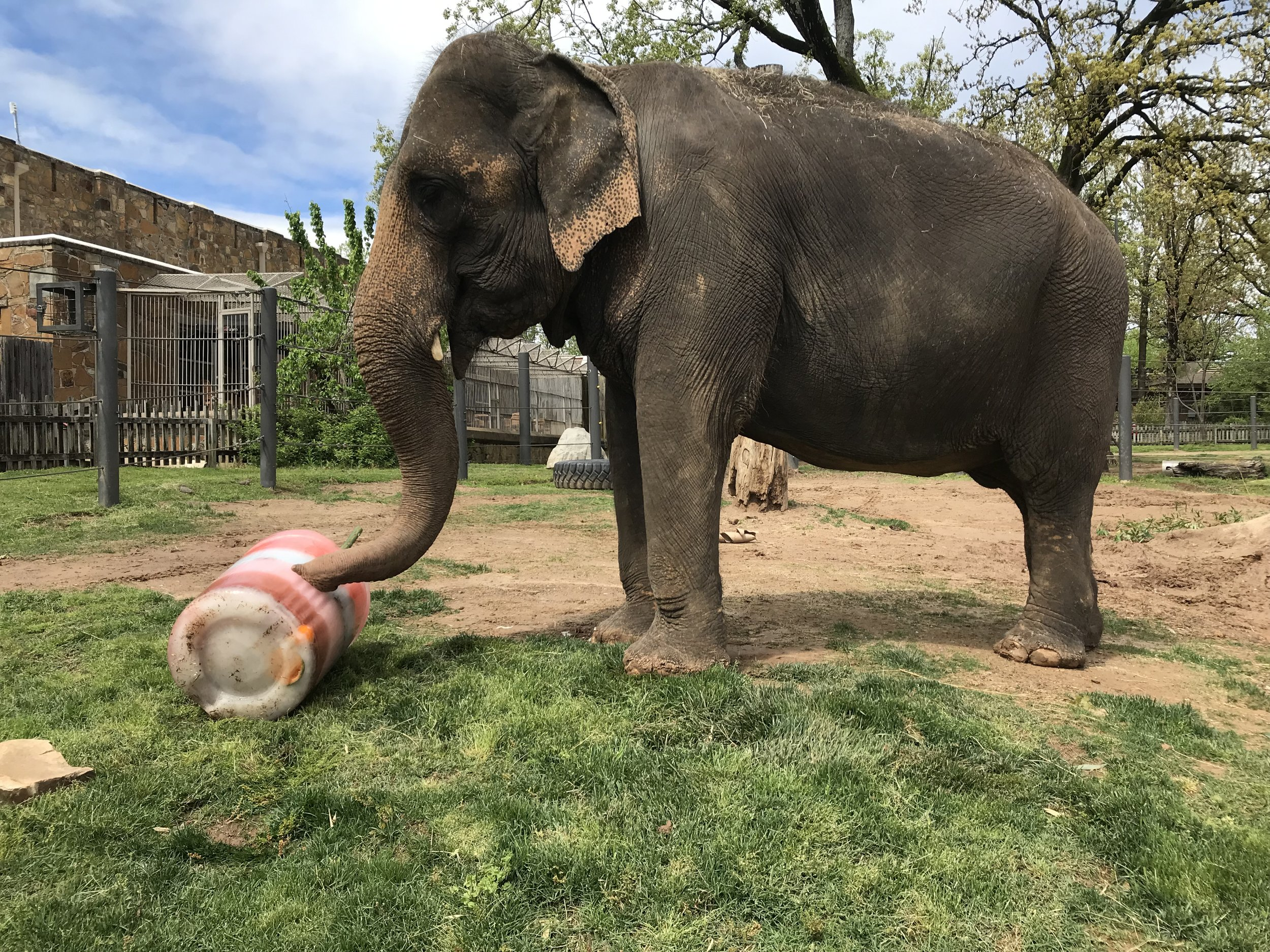 Little Rock Zoo celebrates Sophie while raising funds for AES