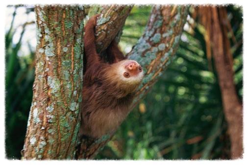 costa-rica-sloth.jpg